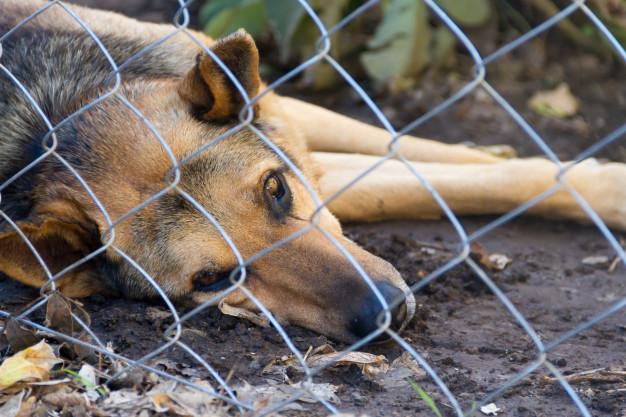 Projeto de Lei que aumenta pena para maus-tratos a animais é aprovado no Senado