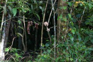 Crânio é encontrado pendurado em mangueira perto de motel