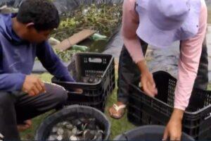 Mil filhotes de tartaruga são soltos no rio em Marabá
